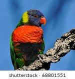 lorikeet | Shutterstock . vector #68801551