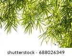 Green Bamboo Leaves With Copy...