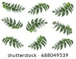 background of tropical leaves... | Shutterstock . vector #688049539