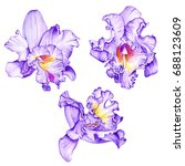 purple orchids. tropical... | Shutterstock . vector #688123609