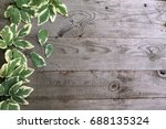 frame from goutweed variegated... | Shutterstock . vector #688135324