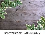 frame from goutweed variegated... | Shutterstock . vector #688135327
