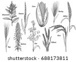 grain  collection  illustration ... | Shutterstock .eps vector #688173811