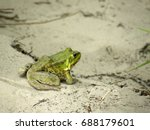 beautiful green frog on the... | Shutterstock . vector #688179601