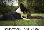 Stock photo a border collie puppy plays happy with a cat 688197559