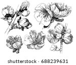 vector collection of hand drawn ...   Shutterstock .eps vector #688239631