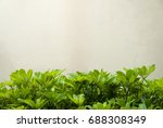 detail of tropical green leaves ... | Shutterstock . vector #688308349
