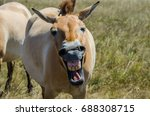 Small photo of Someone made the horse laugh
