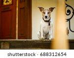 jack russell  dog  waiting a... | Shutterstock . vector #688312654