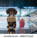 dachshund sausage dog waiting... | Shutterstock . vector #688313164