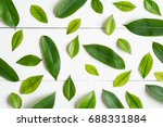 flat lay green leaf on white... | Shutterstock . vector #688331884