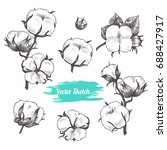 vector cotton plant  hand drawn ... | Shutterstock .eps vector #688427917