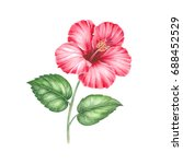 blossom red hibiscus flower... | Shutterstock . vector #688452529