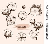 vector cotton plant  hand drawn ... | Shutterstock .eps vector #688480147