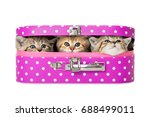 Kitten In A Pink Suitcase