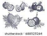 set of hand drawn tropical... | Shutterstock . vector #688525264
