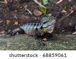 australian eastern water dragon ... | Shutterstock . vector #68859061
