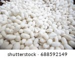 many silk worm in white color | Shutterstock . vector #688592149