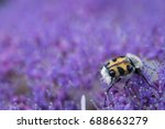 Small photo of scarab (coleoptera) sitting on hydrangea