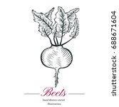 hand drawn sketch beets sketch. ... | Shutterstock .eps vector #688671604
