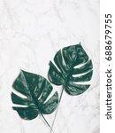 big green tropical monstera...   Shutterstock . vector #688679755