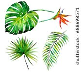 beautiful set with palm leaves... | Shutterstock . vector #688698571