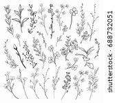black hand drawn herbs  plants... | Shutterstock . vector #688732051