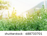 landscape nature view of green... | Shutterstock . vector #688733701