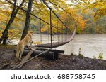 autumn landscape with dog ... | Shutterstock . vector #688758745