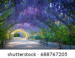 Wisteria Lane In The Adelaide...