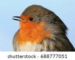 shy european robin  erithacus...   Shutterstock . vector #688777051