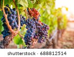 Bunches Of Grapes In The...
