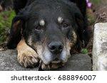 dog outside | Shutterstock . vector #688896007