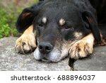 dog outside | Shutterstock . vector #688896037