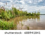 Grass Reeds Along The Amazon...