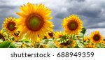 summer web banner or... | Shutterstock . vector #688949359