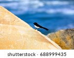 Small photo of Cute little bird sitting on a sandstone rock at Letitia Spit in Australia