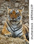 Small photo of Tiger smiling face