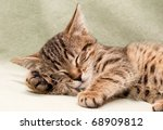 Stock photo tabby cat sleeps on bed 68909812