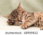 Stock photo tabby cat sleeps on bed 68909812