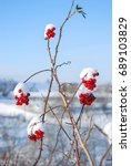 Red Berries Cover With White...