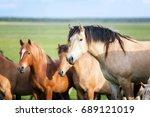 herd of horses. | Shutterstock . vector #689121019