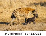 hyena mother pulling cub away | Shutterstock . vector #689127211