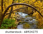 An Autumn River Birch Tree...