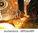 The Butterfly Feast