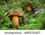 neoboletus luridiformis. edible ... | Shutterstock . vector #689376307