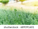 landscape nature view of green... | Shutterstock . vector #689391601