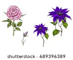 set with clematis and rose... | Shutterstock .eps vector #689396389