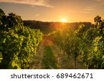 beautiful scenic vineyards at... | Shutterstock . vector #689462671