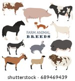 animal farming  livestock.... | Shutterstock .eps vector #689469439